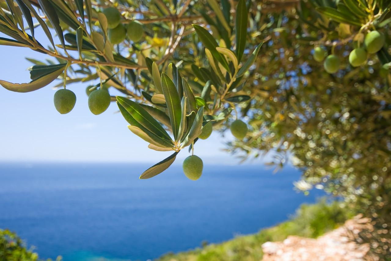 tree, olive, the olives-1754051.jpg